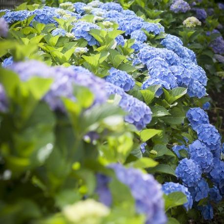Entretien de jardin particuliers for Entretien espace vert particulier