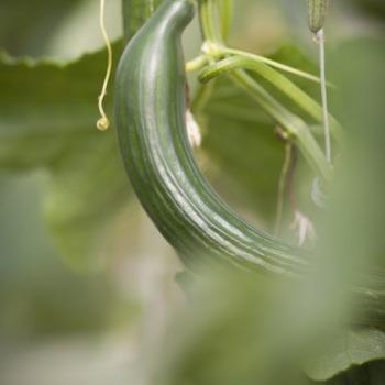Vente de légumes en 1/2 gros